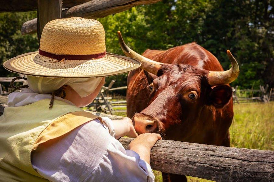 Meet heritage breed animals at the Godiah Spray Tobacco Plantation