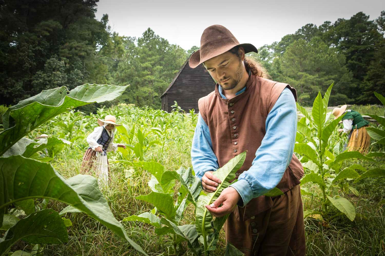 Staff at the Godiah Spray Tobacco plantation are inspecting the tobacco plants for insects that eat the plants