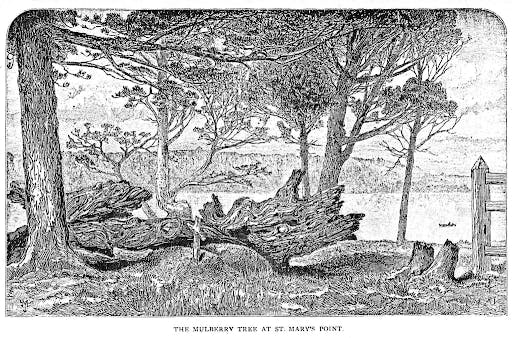 Stories - The Mulberry Tree and Maryland Legends