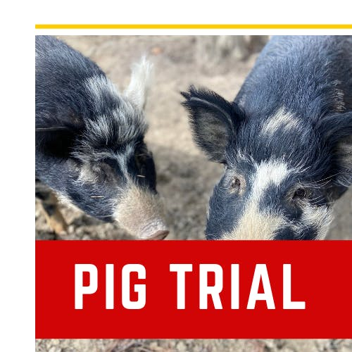 Teacher Resources - Activity - Pig Trial